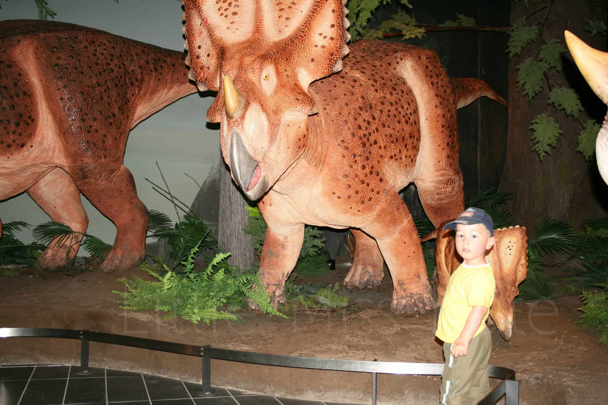 Museum of Nature Review – Nature Up Close
