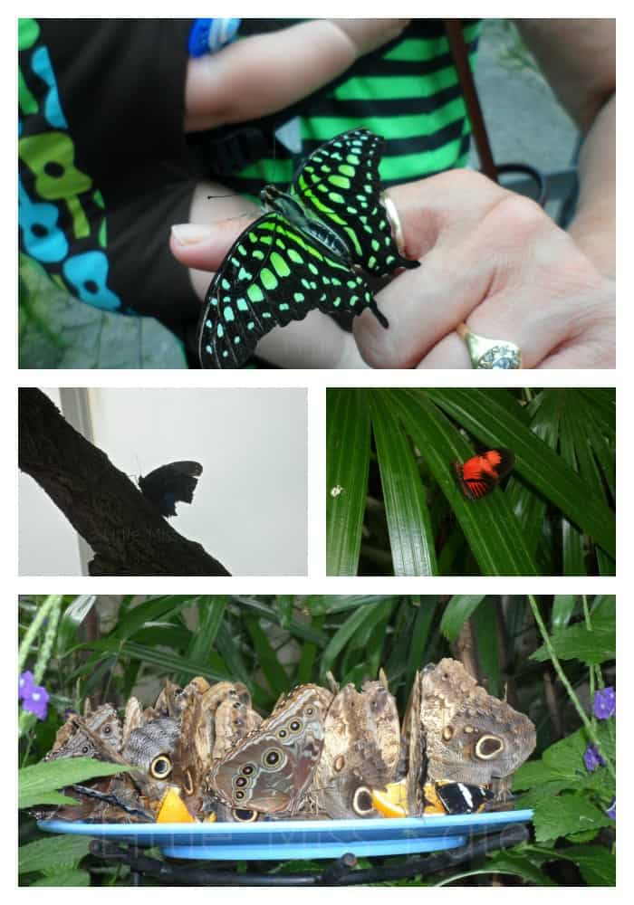 Enter a whole new world at the Niagara Parks Butterfly Conservatory
