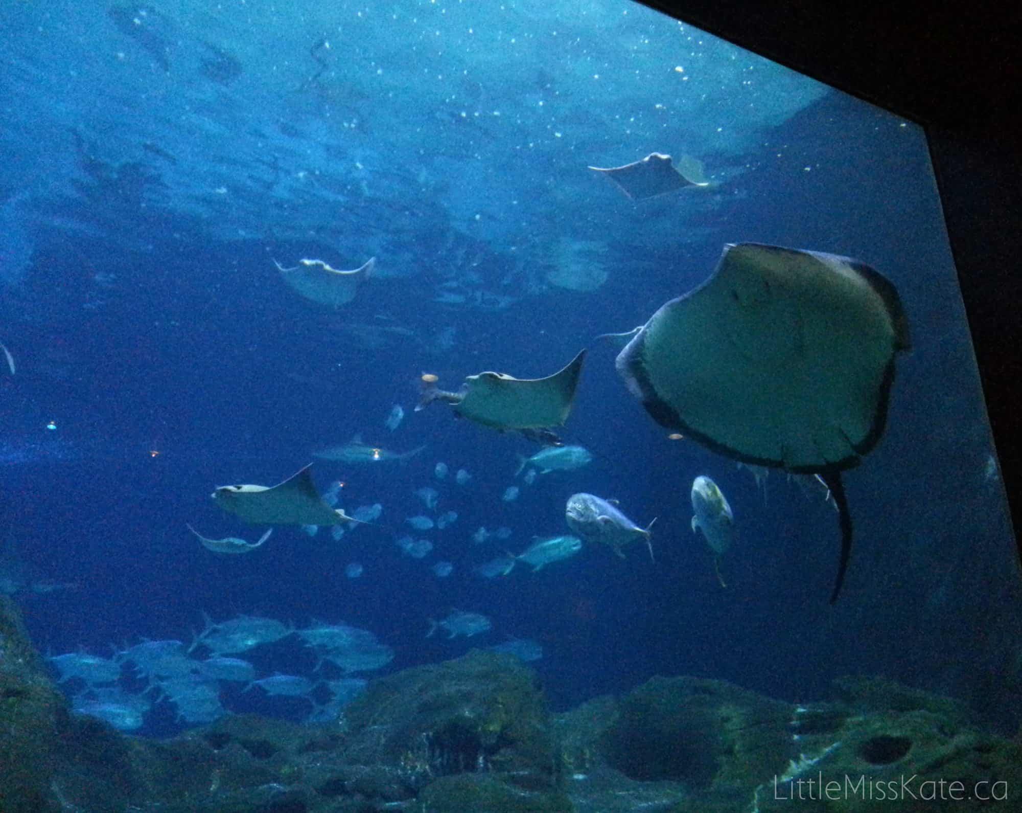 View the Underwater World Like Never Before at Adventure Aquarium