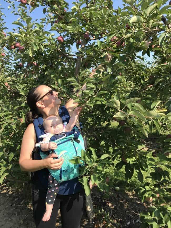 Apple Picking in Brampton