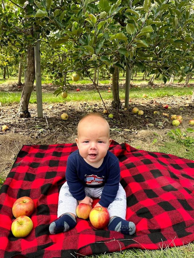Apple Picking at Downeys