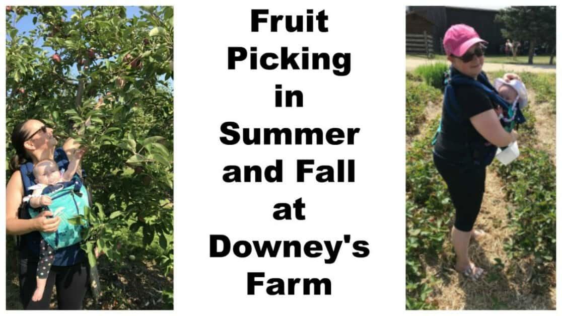 Downey's Farm Market in Brampton – The Ultimate Guide