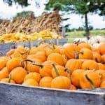 Pumpkin Picking in Mississauga