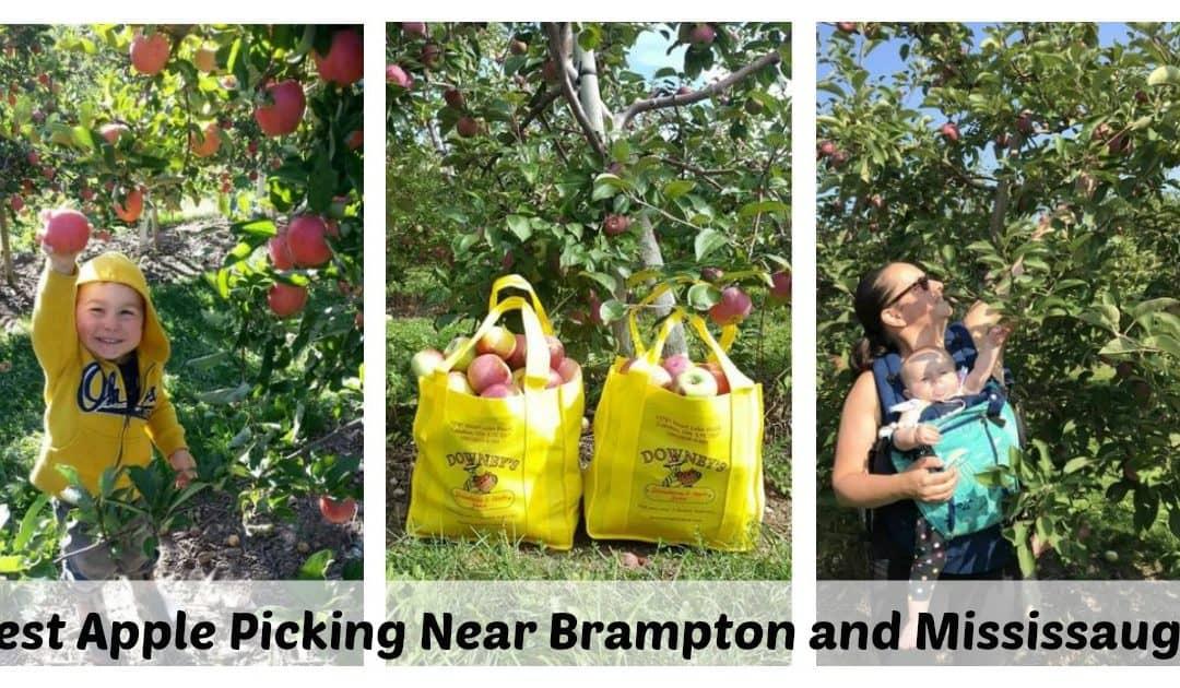Best Apple Picking Near Brampton and Mississauga – Updated 2021