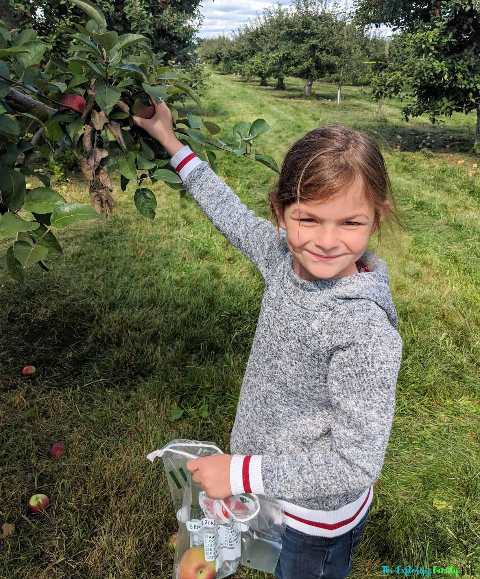 dixie orchards apple picking brampton mississauga easy for kids