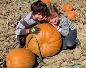 dixie-orchards-pumpkin-patch-brampton-mississauga-1