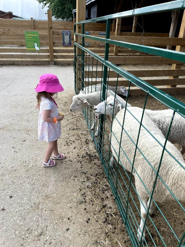 Downey's Farm in Brampton