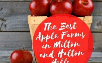 Apple Picking in Milton and Georgetown: The Top 5 Apple Farms