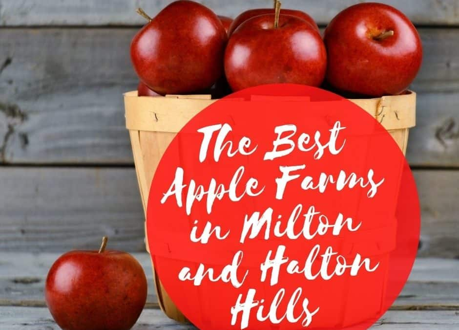 Apple Picking in Milton