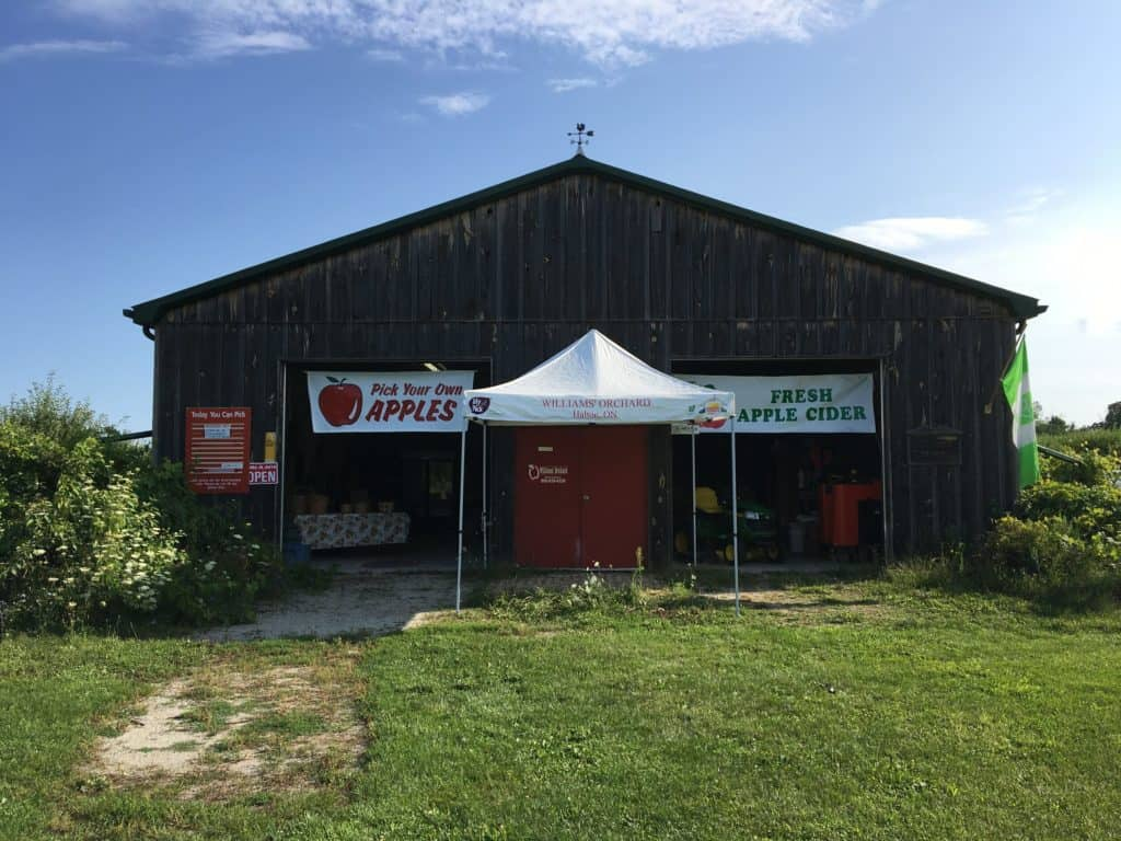 Apple orchards in Milton