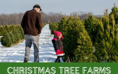 Local Cut your own Christmas Tree Farms in The Greater Toronto Area near Brampton and Mississauga